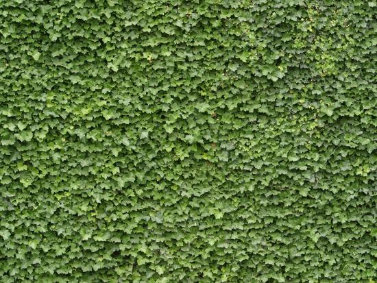lush-bright-green-ivy-textured-background