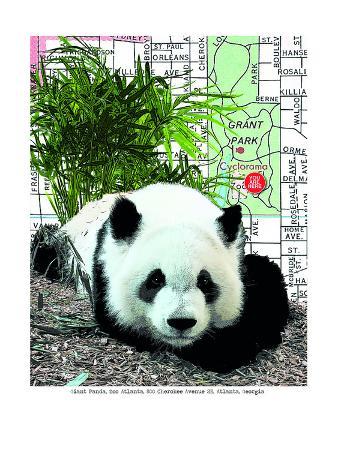 lyn-nance-sasser-and-stephen-sasser-panda