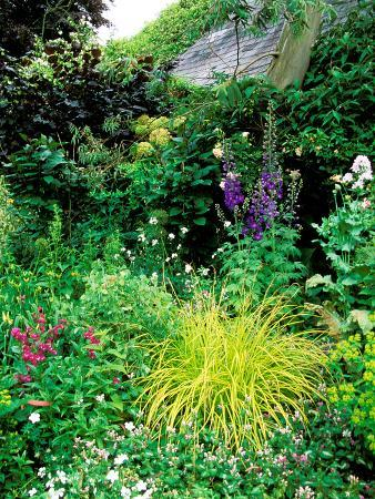 lynn-keddie-country-garden-with-colourful-perennials-pond-greenhouse-and-statues-sharcott-manor-wiltshire