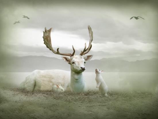 lynne-davies-the-white-stag