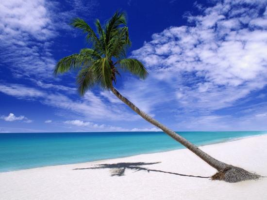 m-dillon-leaning-palm-tree