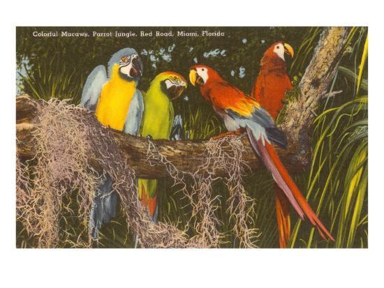 macaws-miami-florida