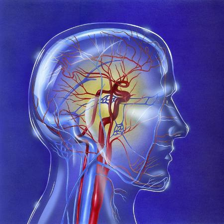 main-arteries-and-veins-within-a-glass-head