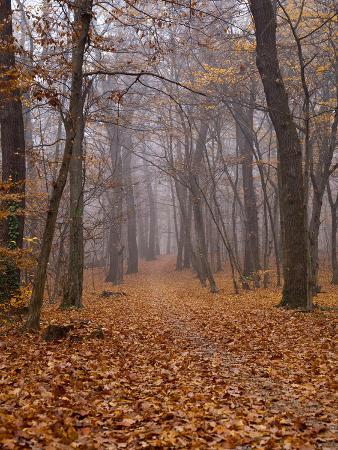 maja-hrnjak-autumn