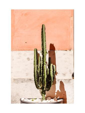 maksim-shebeko-cactus-near-wall