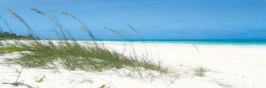 malcolm-sanders-dune-grasses