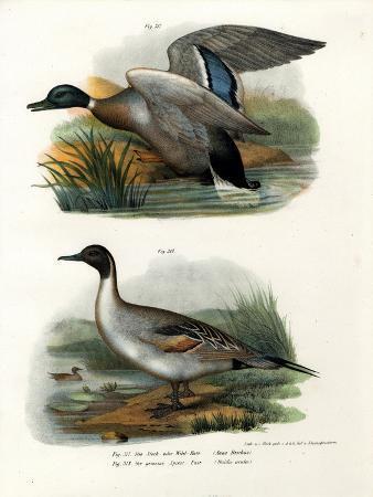 mallard-1864