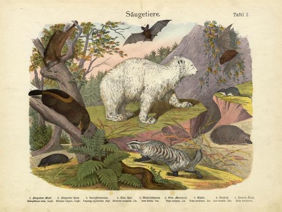 mammals-c-1860
