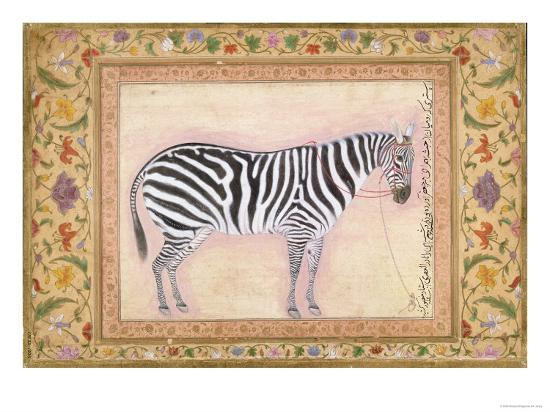 mansur-zebra-from-the-minto-album-1621