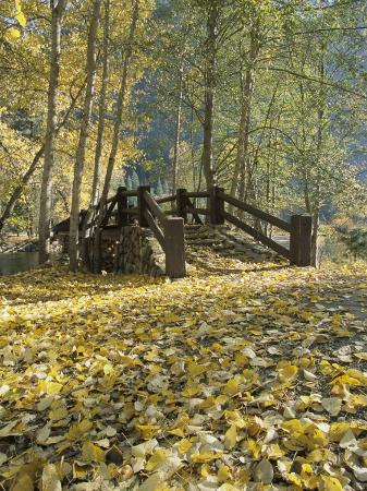 marc-moritsch-a-sentinel-meadow-footbridge-blanketed-in-autumn-foliage
