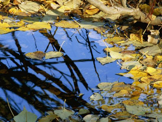 marc-moritsch-autumn-leaves-float-in-a-pool-of-water