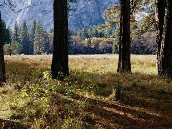 marc-moritsch-tree-trunks-in-a-mountain-meadow