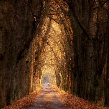 marcin-sobas-autumnal