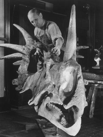margaret-bourke-white-artist-coloring-model-made-from-original-skull-of-styracosaurus-american-museum-of-natural-history