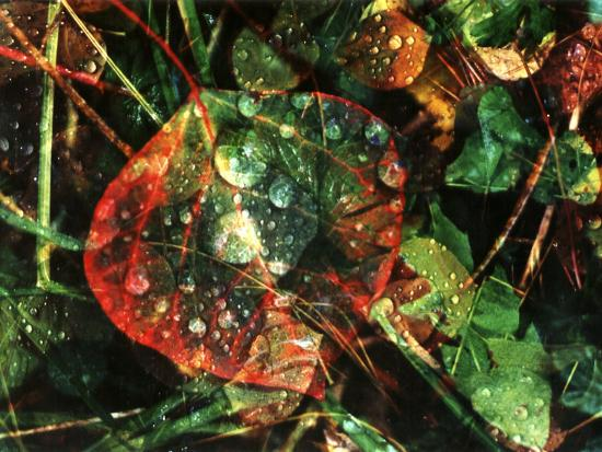 margaret-l-jackson-fallen-aspen-leaves-after-rain-rocky-mountains-southwest-colorado-usa