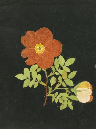 margaret-nash-cut-out-watercolour-of-a-flower-circa-1783