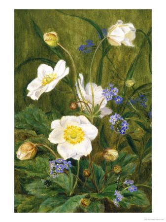 maria-krabbe-anemones-and-forget-me-nots