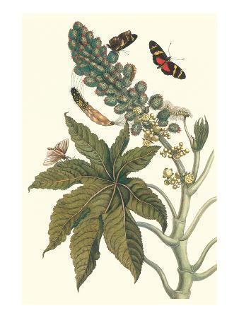 maria-sibylla-merian-castor-oil-tree-with-a-moth