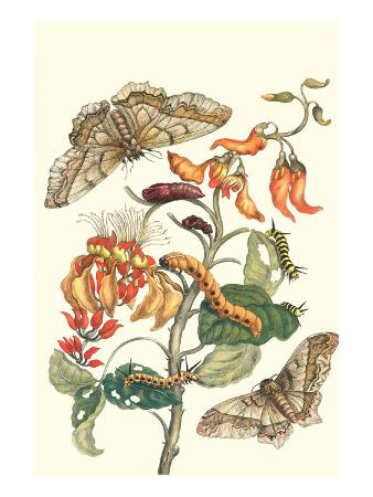 maria-sibylla-merian-giant-silk-moth-on-a-purple-coral-tree