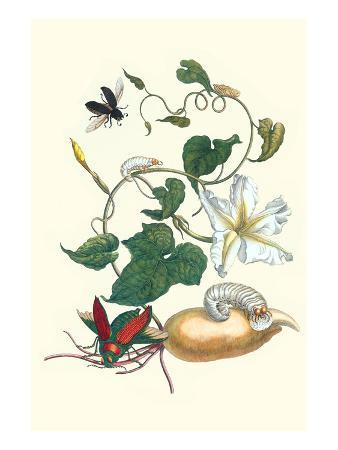 maria-sibylla-merian-moonflower-with-giant-metallic-ceiba-borer-and-a-horned-passalus-beetle