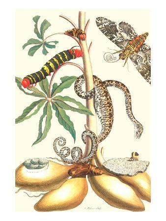 maria-sibylla-merian-moths-and-a-tree-boa