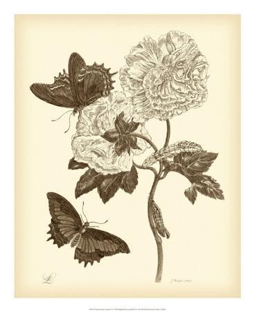 maria-sibylla-merian-nature-study-in-sepia-iv
