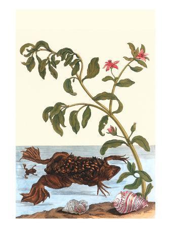 maria-sibylla-merian-shoreline-purslane-with-a-common-surinam-toad