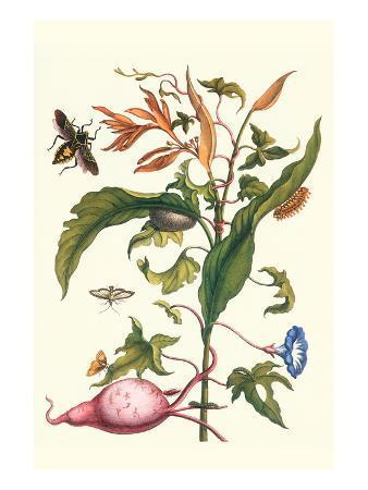maria-sibylla-merian-sweet-potato-with-melonworm-and-giant-big-legged-bug