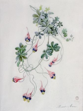 marie-anne-flower-pieces