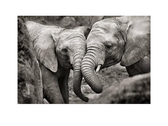 marina-cano-elephants-in-love