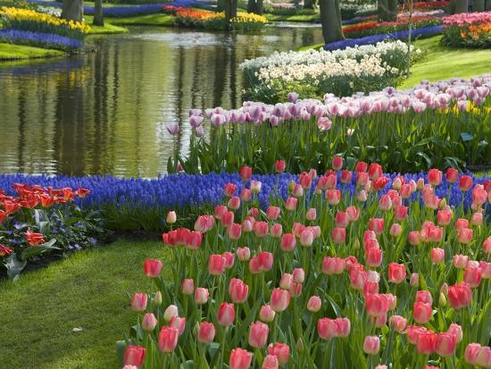 mark-bolton-spring-tulips-by-stream