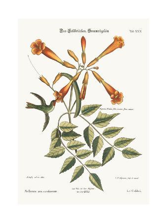 mark-catesby-the-hummingbird-1749-73