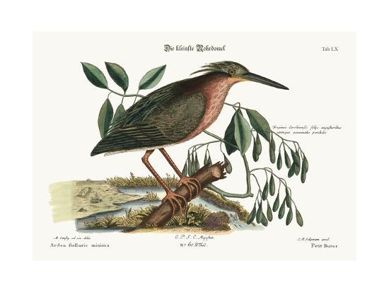 mark-catesby-the-small-bittern-1749-73