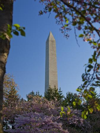 mark-chivers-the-washington-monument-framed-by-japanese-cherry-trees-in-bloom-washington-d-c-usa