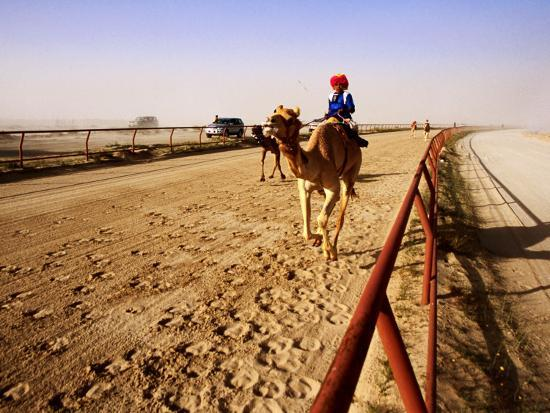 mark-daffey-race-camels-in-home-straight-of-kuwait-camel-racing-club-during-training-session