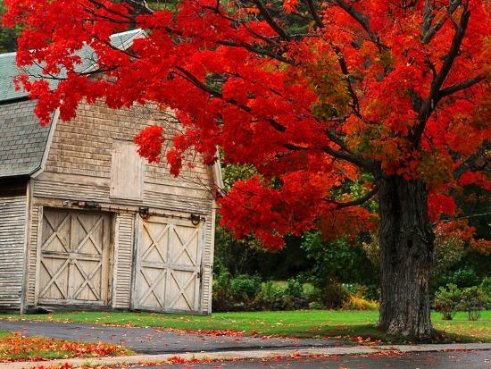 mark-karrass-tree-with-red-leaves-and-barn