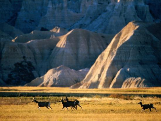 mark-newman-mule-deer-odocoileus-hemionus-with-backdrop-of-rocky-hills-badlands-national-park-u-s-a