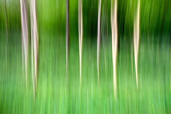 mark-sunderland-abstract-trees