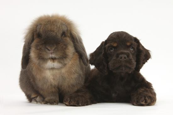 mark-taylor-american-cocker-spaniel-puppy-and-lionhead-cross-rabbit