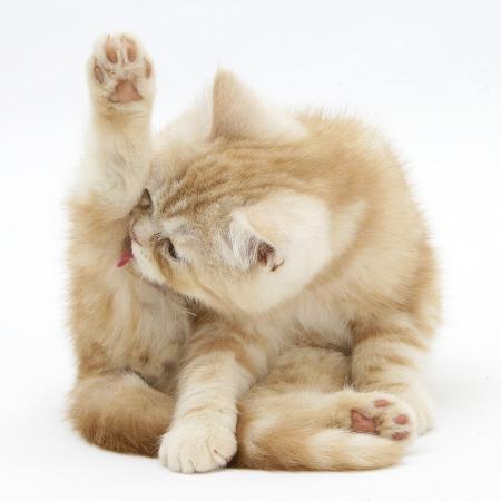 mark-taylor-ginger-kitten-funnel-grooming