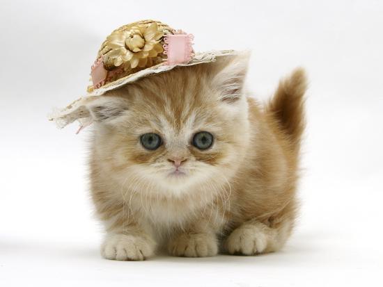 mark-taylor-ginger-kitten-wearing-a-straw-hat