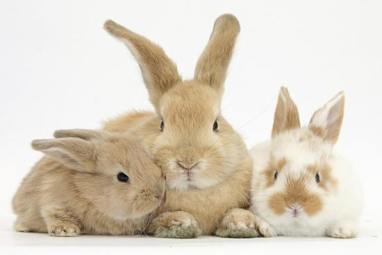 mark-taylor-sandy-rabbit-and-two-babies
