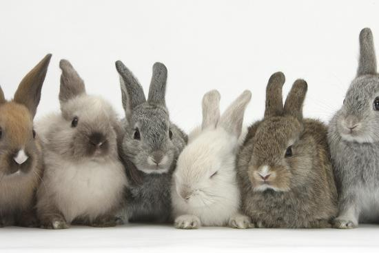 mark-taylor-six-baby-rabbits-in-line