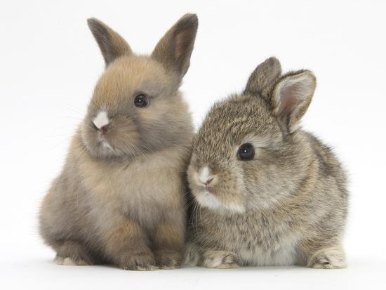 mark-taylor-two-baby-rabbits