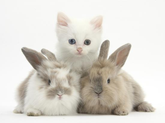 mark-taylor-white-kitten-and-baby-rabbits