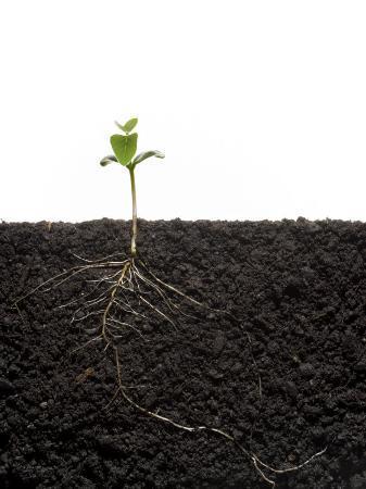 mark-thiessen-cross-section-of-soybean-seedling-in-soil