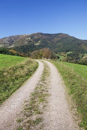 markus-path-leading-to-belchen-mountain-black-forest-baden-wurttemberg-germany-europe