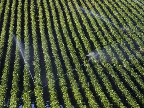 marli-miller-aerial-view-of-irrigated-potato-furrows-eastern-idaho-usa