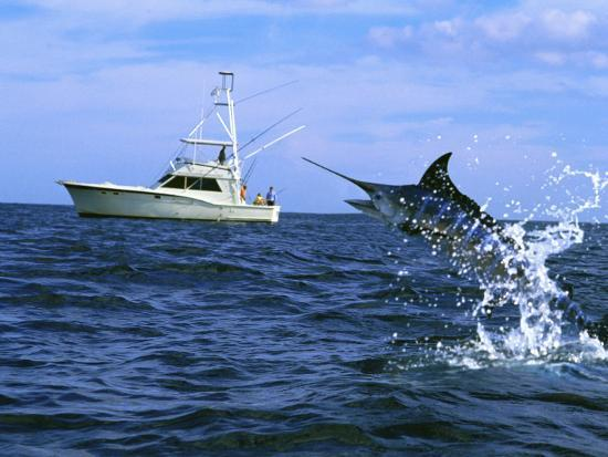 marlin-with-fishing-boat-in-background