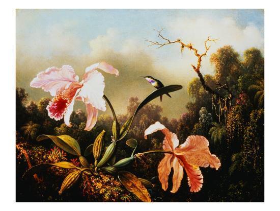 martin-johnson-heade-orchids-and-hummingbirds